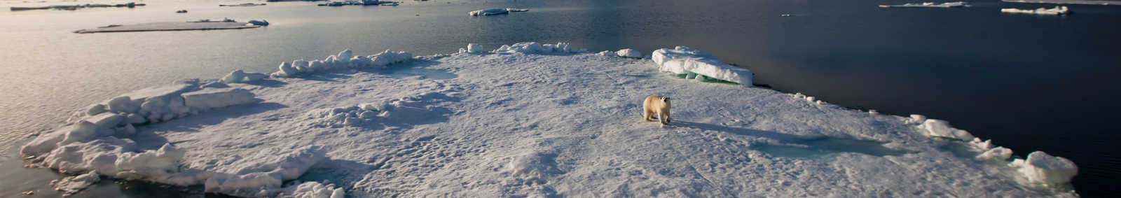 Polar bear on ice, Arctic