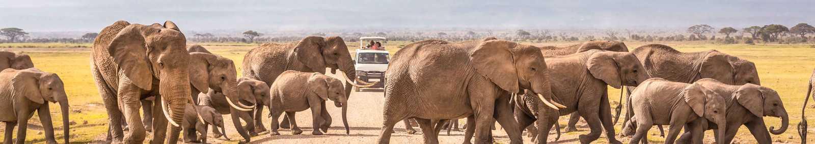 Tanzania Elephant Safari