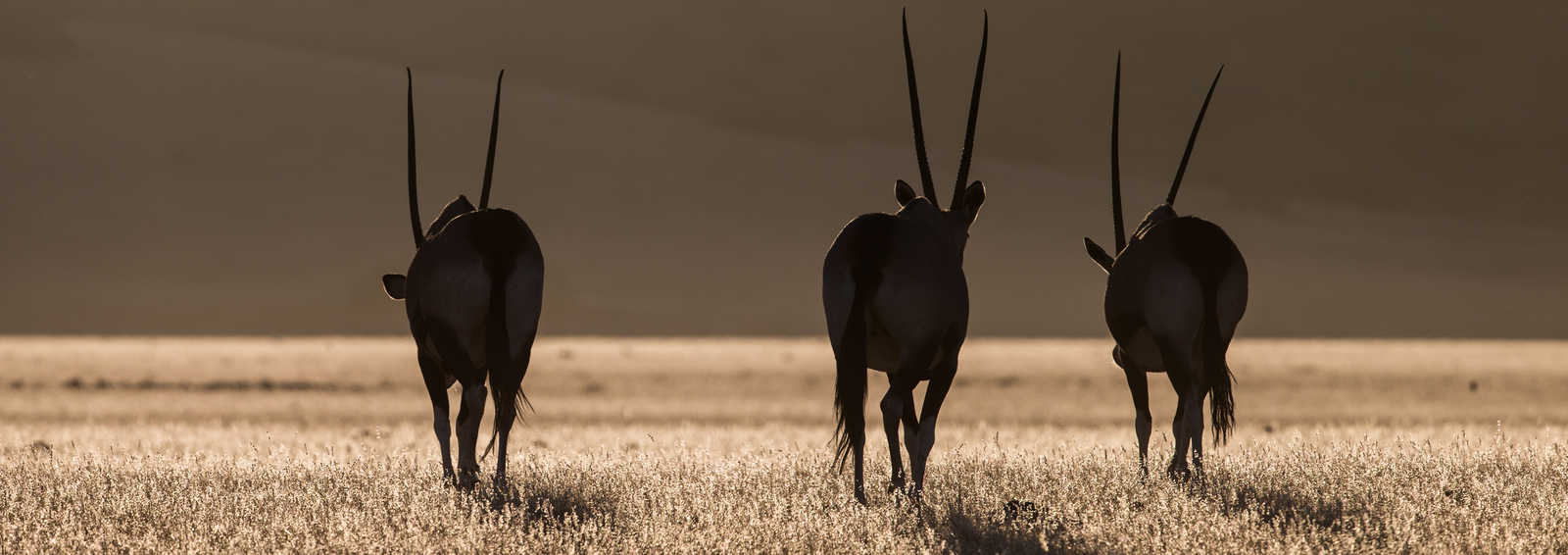 Namibian wildlife, Namibia - Copywrite Paul Goldstein