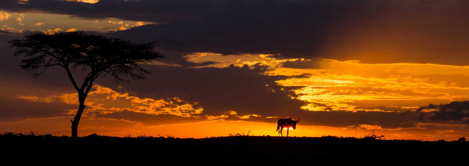 Wildbeest sunset, Masai Mara