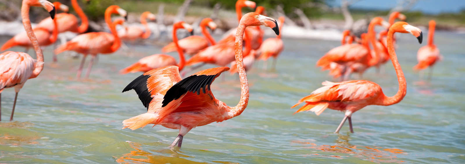 Celestun Flamingoes, Yucatan, Mexico