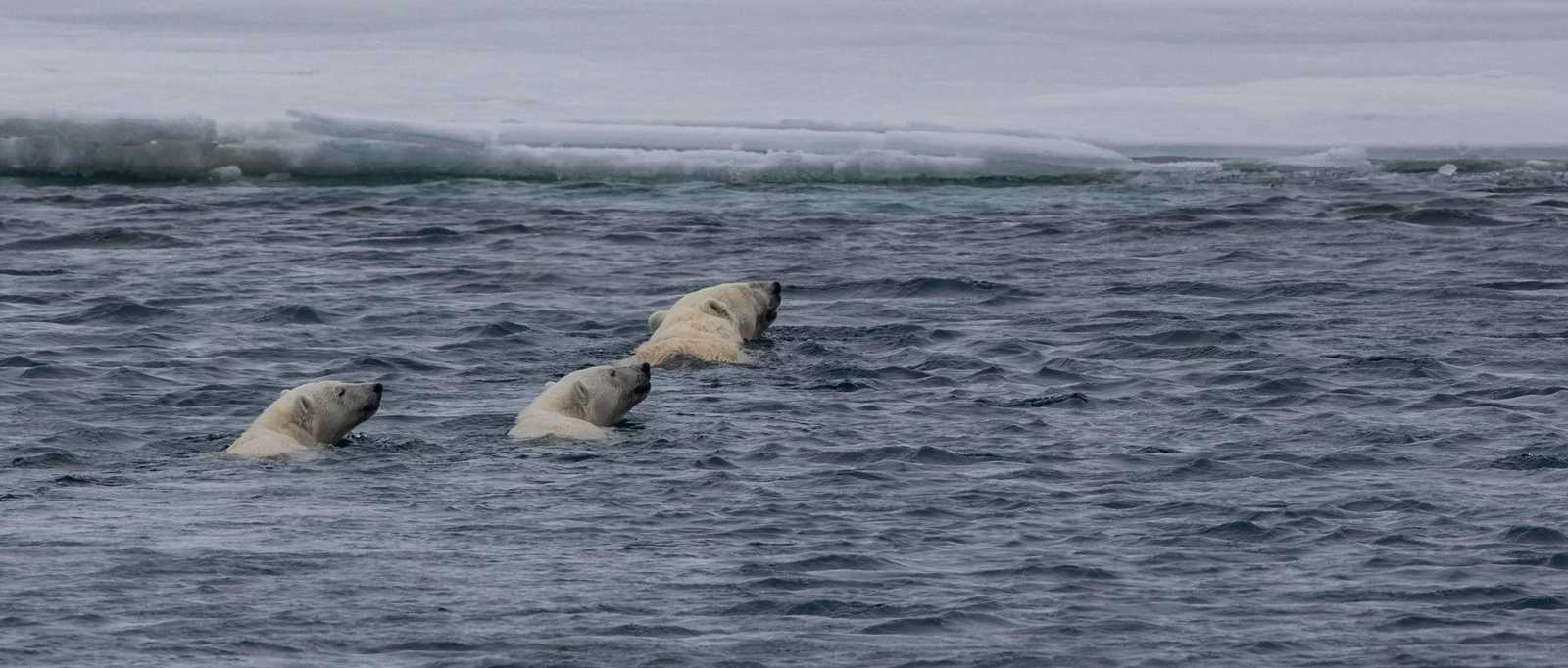 Spitsbergen charter 2018