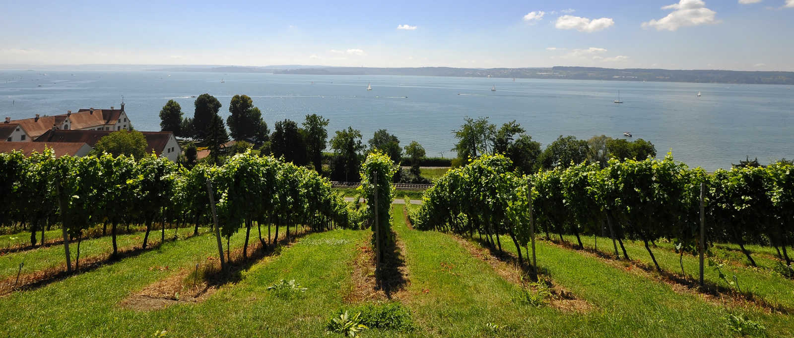 Vineyards set on hilltop overlooking Lake Constance, Italy