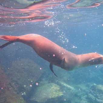 Sea Lion 3