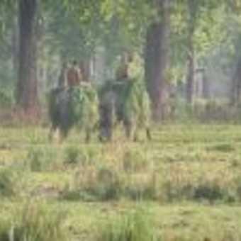 Chitwan elephants