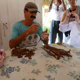 Cigar making in Vinales