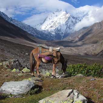 Nanda Devi East Base Camp