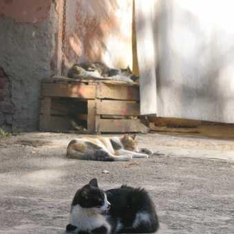 Bahia Palace 3 cats
