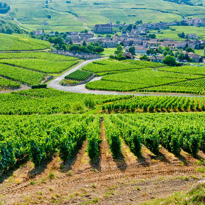 Vineyards in Burgundy, France