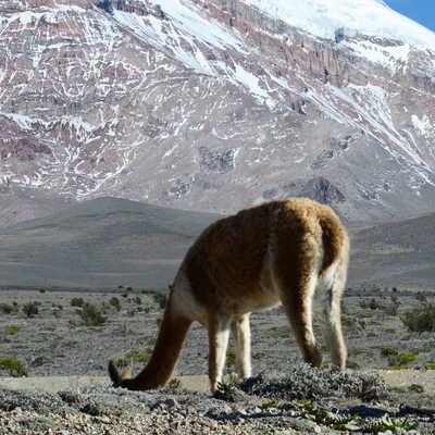 Chimborazo Volcano, Andes, Ecuador