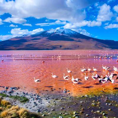 Laguna Colorada, Salar de Uyuni, Bolivia