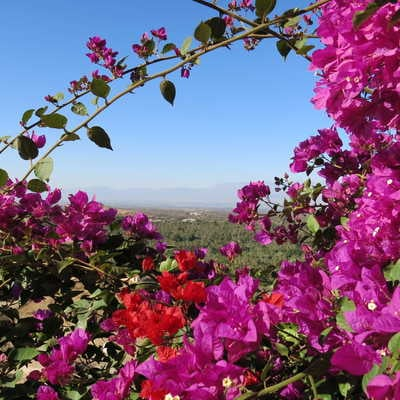 Wild flowers in the Anti-Atlas Mountains