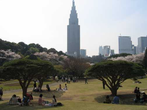 Goverment building from Shinjuka Gyoen Gardens