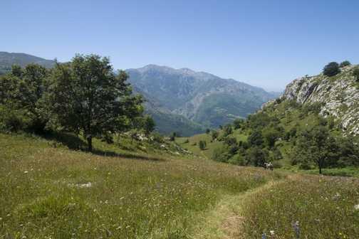 meadow on first days walk