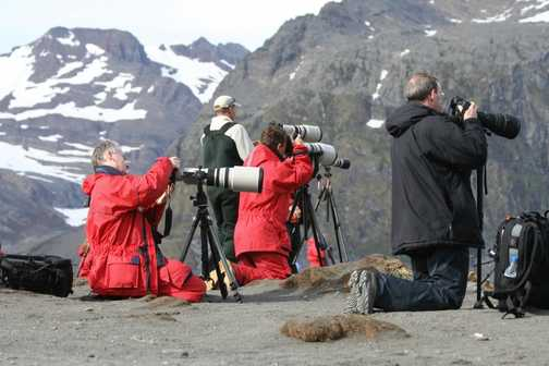 A flock of Giant Canon Petrels and a lone Giant Nikon Booby