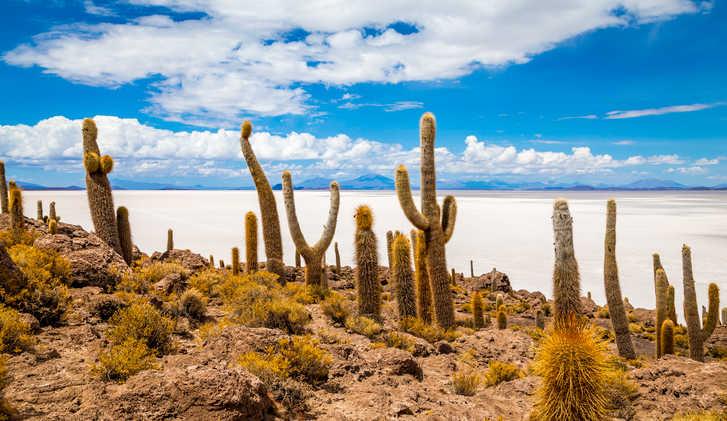 Incahuasi Island, Salar de Uyuni, Bolivia