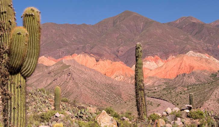 Pasacana Cactus (Trichocereus pasacana) in Northern Argentina